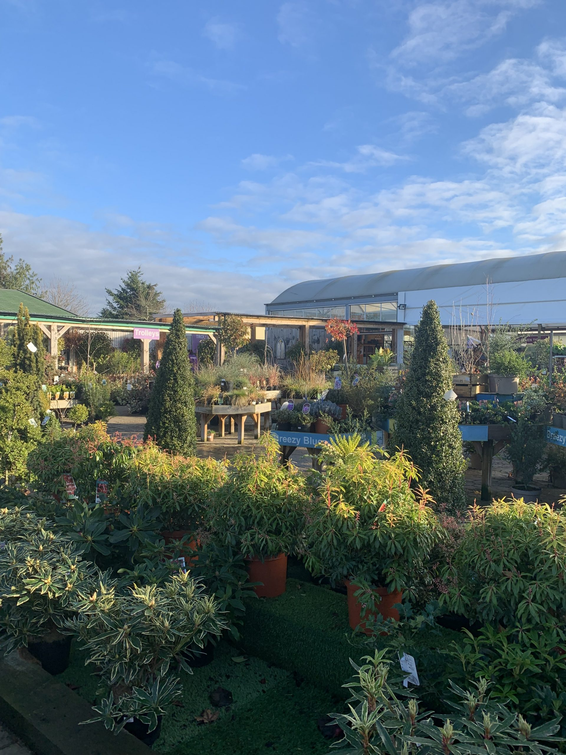 The outside area of the Ullesthorpe Palmers Garden Centre